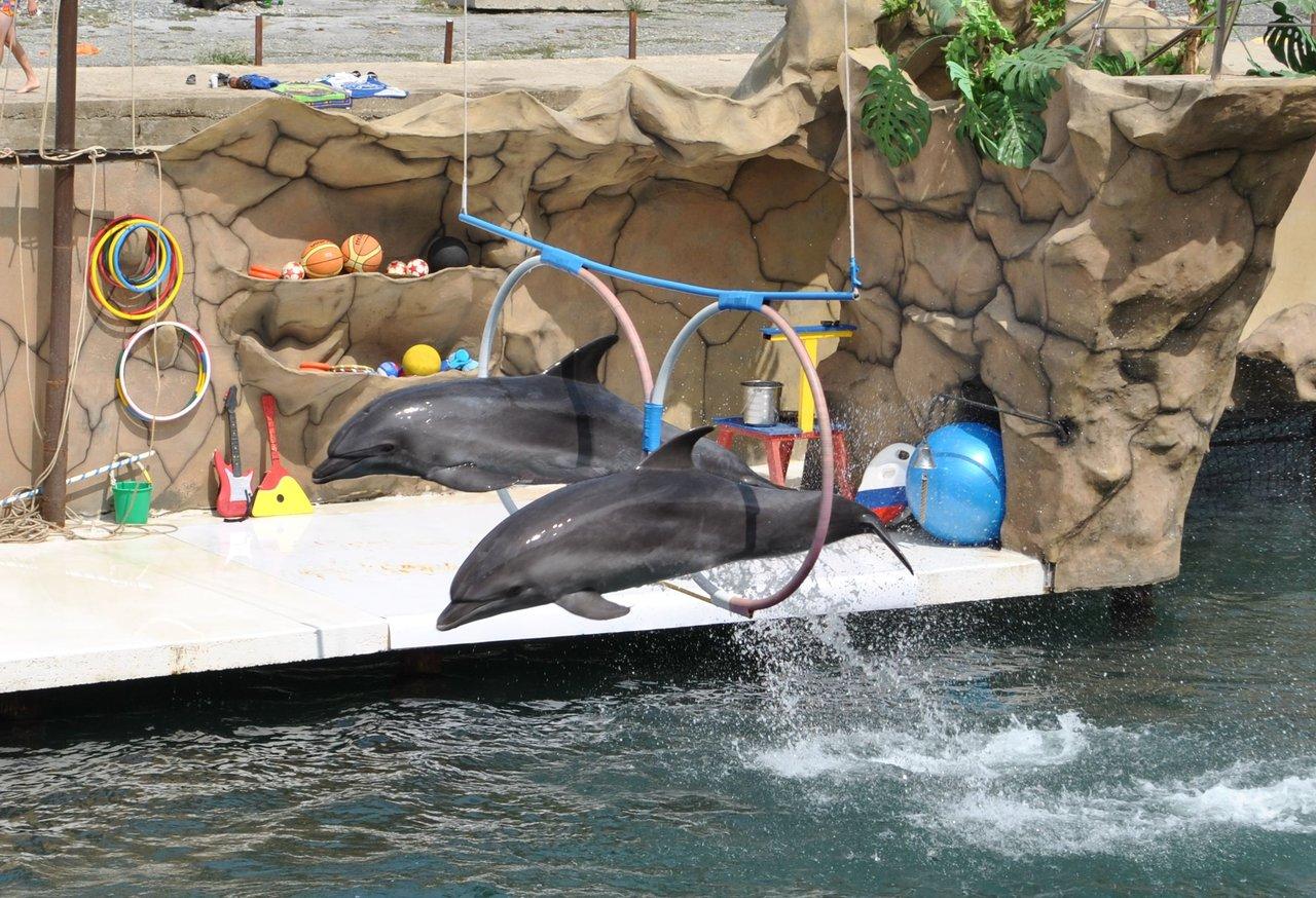 сколько стоит вход в дельфинарий в батуми сохраняют ноги