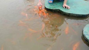 озеро с рыбками