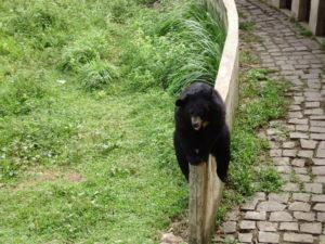 медведь в парке янг бей