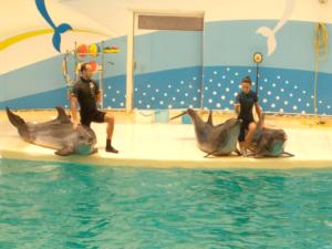 дельфинарий в белек