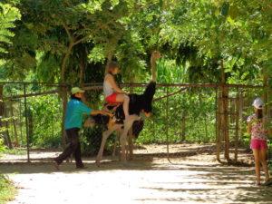 страусы в янг бей