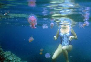 медузы в тунисе