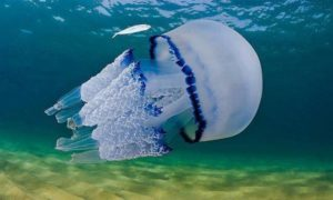 Ожог медузы