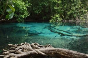 джунгли на краби