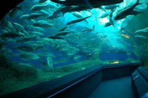 аквариум в паттайе