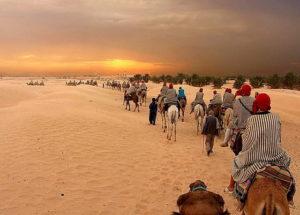 экскурсия на верблюдах в тунисе