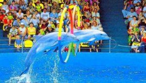 дельфинарий в туапсе