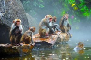 остров обезьян нанван