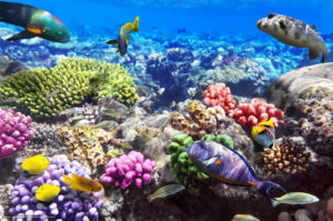 подводный мир в шарм - эль - шейхе